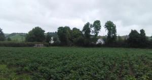 Crop - Llanrhystud